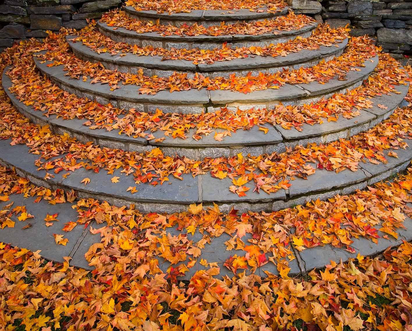 sarah-lawrence-steps-autumn.jpg